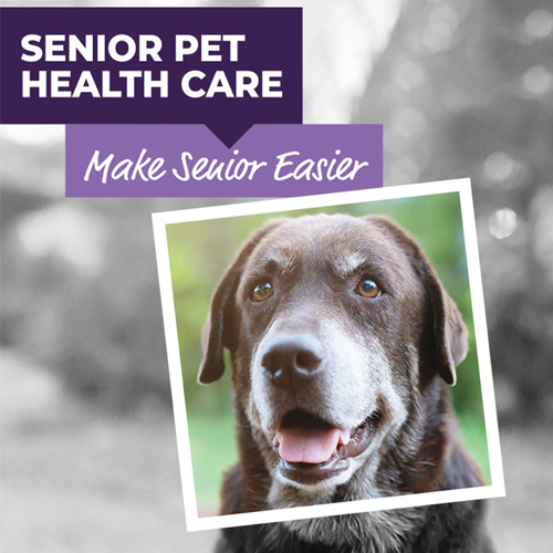 Animalcare Research Highlights Opportunity for Greater Focus on Caring for Senior Pets